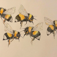 Bees – Wildlife Insect Art – Fetcham Surrey Artist Erika Perrett