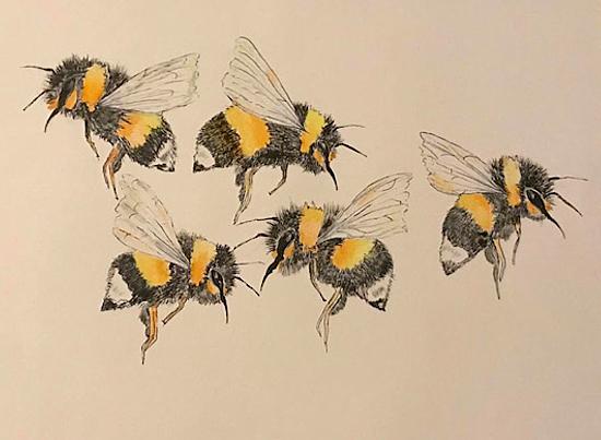 Bees - Wildlife Insect Art - Fetcham Surrey Artist Erika Perrett