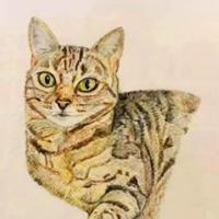 Cat Pet Portrait – Pencil Drawing – Fetcham Surrey Artist Erika Perrett