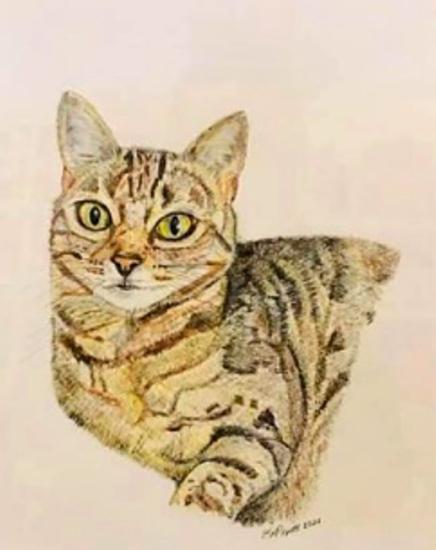 Cat Pet Portrait - Pencil Drawing - Fetcham Surrey Artist Erika Perrett