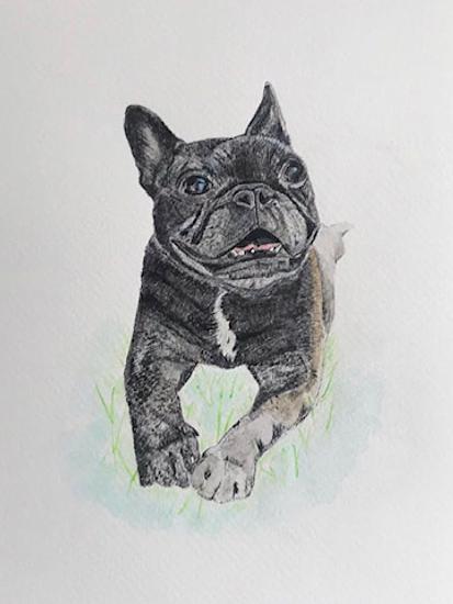 Dog Portrait - Animal Artist Erika Perrett - Pencil Drawing with Watercolour