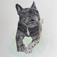 Dog Portrait – Animal Artist Erika Perrett – Pencil Drawing with Watercolour