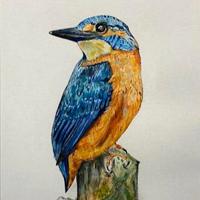 Kingfisher – Bird Watercolour – Fetcham Surrey Artist Erika Perrett