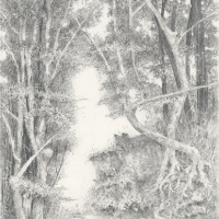 Graphite Artwork – Forest Trees and Tree Roots – Michael Walsh – Artist based in Rochester Kent