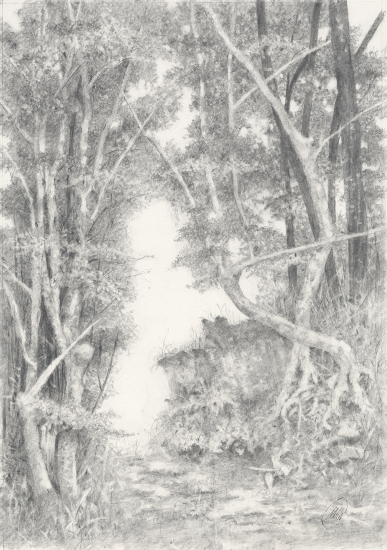 Graphite Artwork - Forest Trees and Tree Roots - Michael Walsh - SGFA Artist based in Rochester Kent