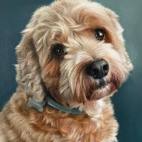 Pet Portrait – Dog – Nathalie Beauvillain Scott Guildford Surrey Portrait Artist