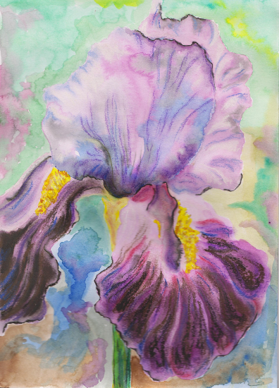 Deep Purple Iris - Floral Art - Carla Scarano Chobham Artist